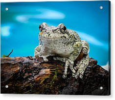Portrait Of A Frog Acrylic Print