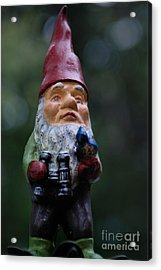 Portrait Of A Garden Gnome Acrylic Print by Amy Cicconi