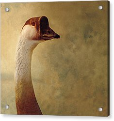 Portrait Of A Goose Acrylic Print by Fran Riley