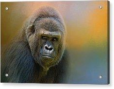 Portrait Of A Gorilla Acrylic Print