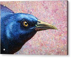 Portrait Of A Grackle Acrylic Print by James W Johnson