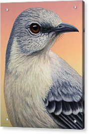 Portrait Of A Mockingbird Acrylic Print by James W Johnson