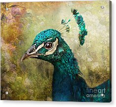Portrait Of A Peacock Acrylic Print by Pauline Fowler