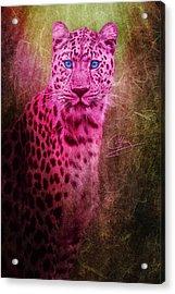 Portrait Of A Pink Leopard Acrylic Print