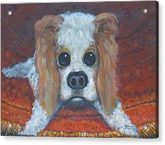 Portrait Of A Puppy Acrylic Print