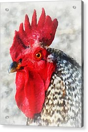 Portrait Of A Rooster Acrylic Print by Susan Savad