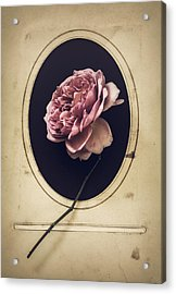 Portrait Of A Rose Acrylic Print