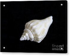 Portrait Of A Sea Shell Acrylic Print by Arlene Carmel