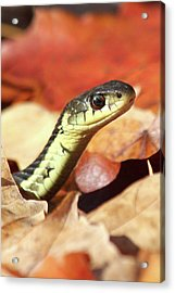 Acrylic Print featuring the photograph Portrait Of A Snake by Doris Potter