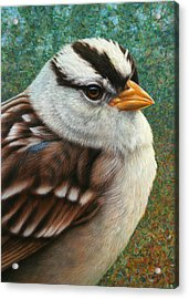 Portrait Of A Sparrow Acrylic Print by James W Johnson