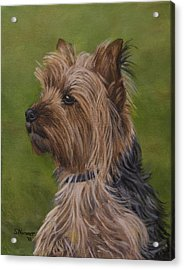 Acrylic Print featuring the painting Portrait Of A Yorkie by Sharon Nummer