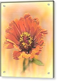 Portrait Of A Zinnia Acrylic Print by Larry Bishop
