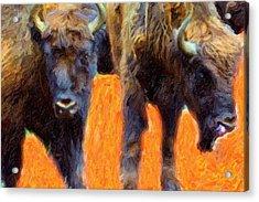 Portrait Of Bison  Acrylic Print