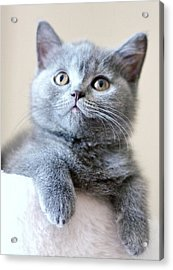 Portrait Of Cute Cat Acrylic Print by Ozcan Malkocer