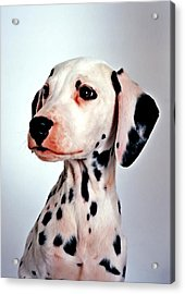 Portrait Of Dalmatian Dog Acrylic Print by Lanjee Chee
