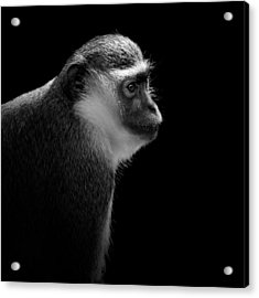 Portrait Of Green Monkey In Black And White Acrylic Print