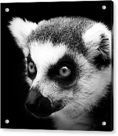 Portrait Of Lemur In Black And White Acrylic Print by Lukas Holas