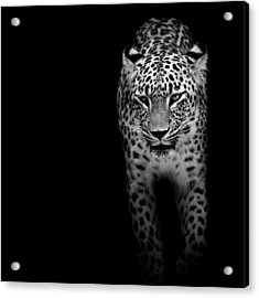 Portrait Of Leopard In Black And White II Acrylic Print by Lukas Holas