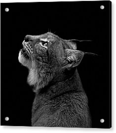 Portrait Of Lynx In Black And White Acrylic Print by Lukas Holas