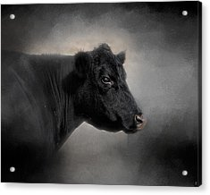 Portrait Of The Black Angus Acrylic Print