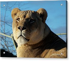 Portrait Of The Mighty Queen Acrylic Print by Lingfai Leung