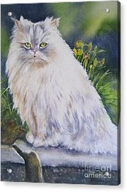 Portrait Of White Cat Acrylic Print by Patricia Pushaw