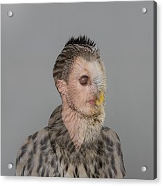 Portrait Of Young Man With Owl Overlay Acrylic Print by Nisian Hughes