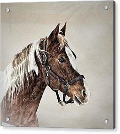 Posed Acrylic Print by Gary Smith
