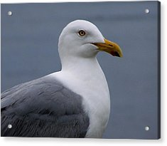Acrylic Print featuring the photograph Posing Gull by Gene Cyr