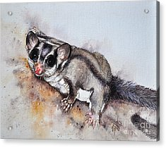 Possum Cute Sugar Glider Acrylic Print by Sandra Phryce-Jones
