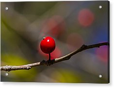 Possumhaw Fruit Abstraction Acrylic Print