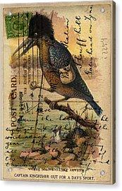 Postcard Kingfisher Acrylic Print by Sarah Vernon