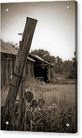 Acrylic Print featuring the photograph Posted In Time by Amber Kresge