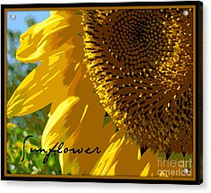 Acrylic Print featuring the photograph Posterized Sunflower by Heidi Manly