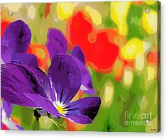 Posterized Viola Acrylic Print by Heidi Manly