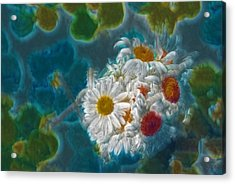 Pot Of Daisies 02 - S11bl01 Acrylic Print by Variance Collections