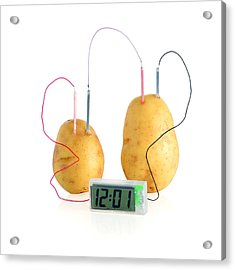 Potato Clock Acrylic Print by Science Photo Library