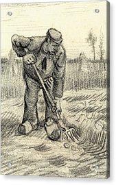 Potato Gatherer Acrylic Print by Vincent Van Gogh