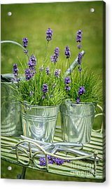 Pots Of Lavender Acrylic Print by Amanda Elwell