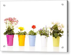 Potted Flowers Acrylic Print by Alexey Stiop