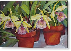 Potted Orchids Acrylic Print by Judy Mercer