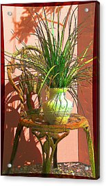 Potted Plant In Chair No 3 Acrylic Print by Ginny Schmidt