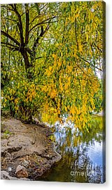 Poudre River Acrylic Print by Baywest Imaging