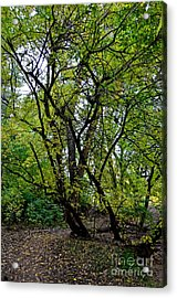 Poudre Trees Acrylic Print by Baywest Imaging