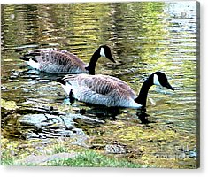 Acrylic Print featuring the photograph Poultry In Motion by Cristophers Dream Artistry