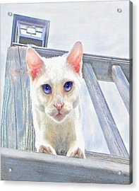 Acrylic Print featuring the digital art Pounce by Jane Schnetlage