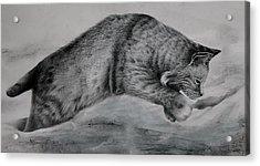 Pounce Acrylic Print by Jean Cormier