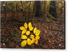 Power Of Illumination Acrylic Print