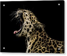 Jaded Acrylic Print by Paul Neville
