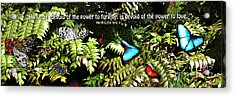 Power To Love Acrylic Print by Diane E Berry